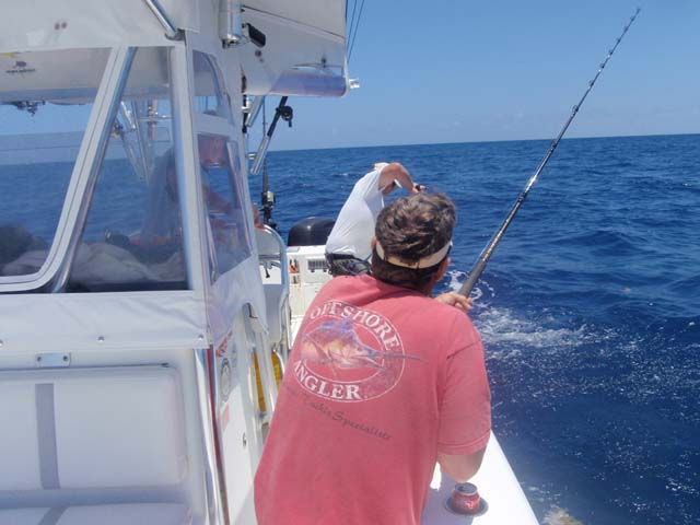 A Cobia gets the gaff while deep sea fishing aboard the Goin Off out of Port Canaveral near Cocoa Beach