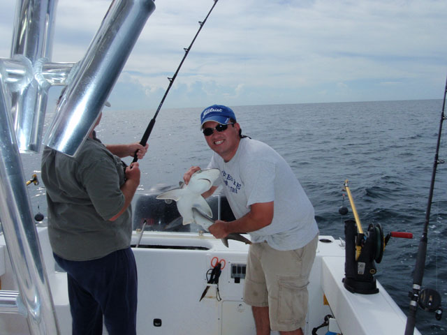 Atlantic Sharpnose Shark caught aboard the Goin Off out of Port Canaveral near Cocoa Beach.
